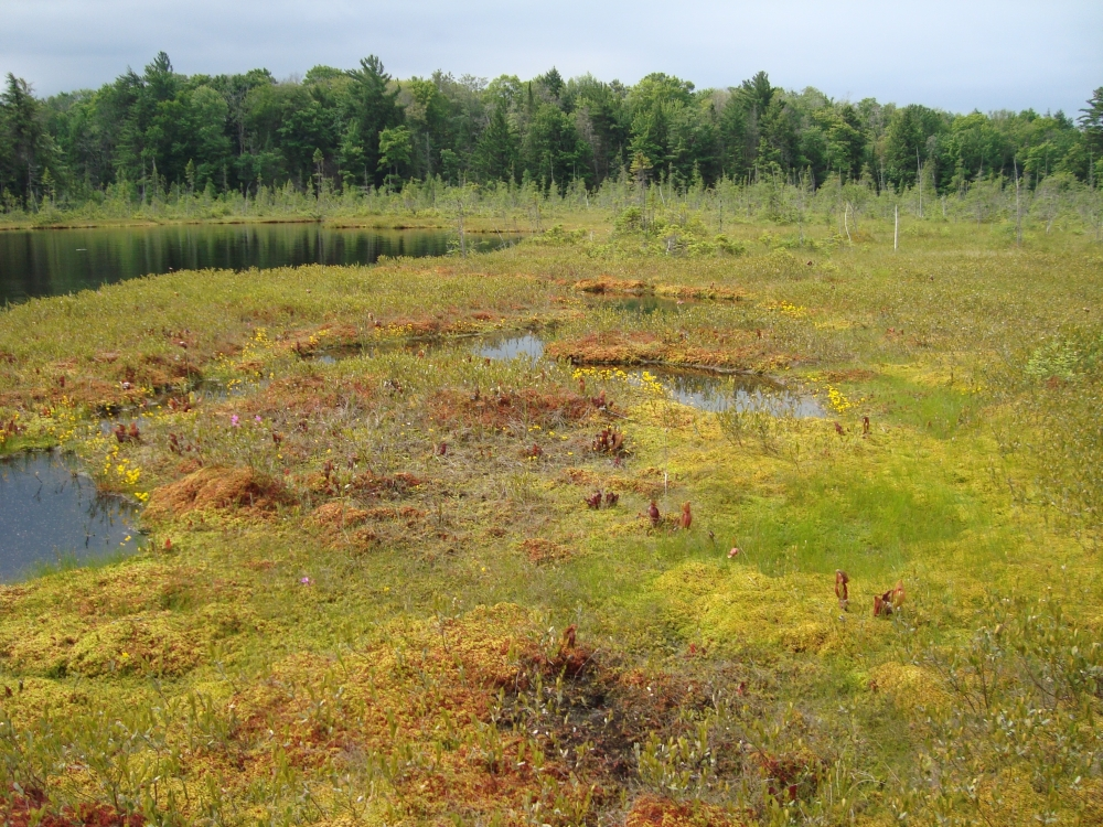 A photo of the Bog natural community type