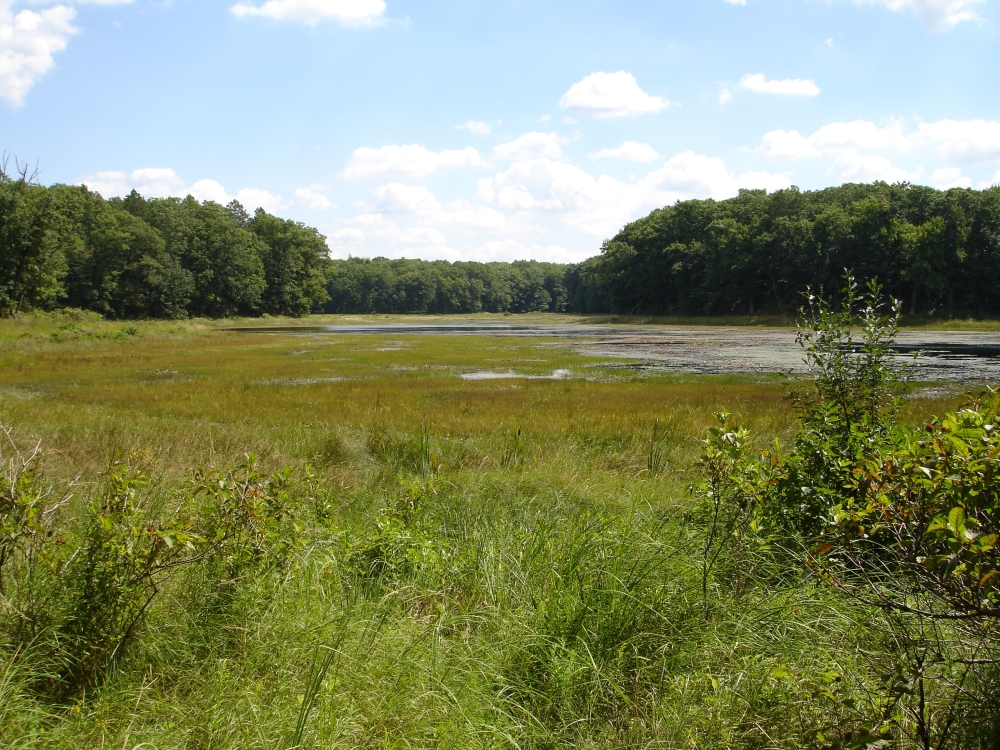 A photo of the Coastal Plain Marsh natural community type