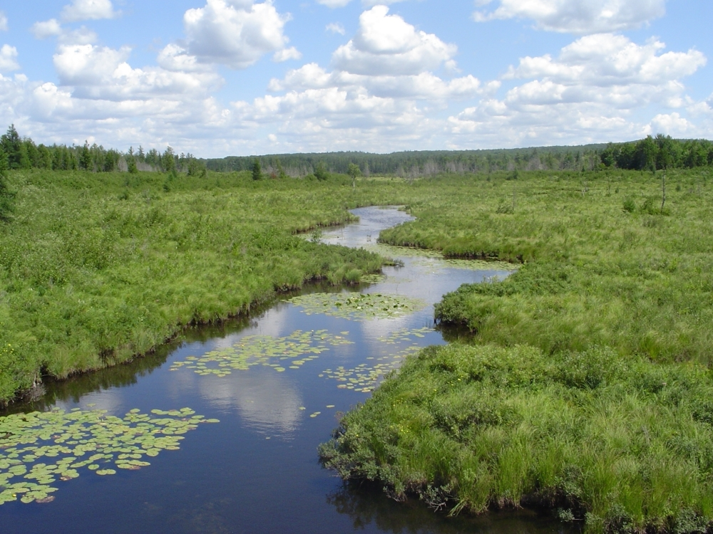 A photo of the Northern Wet Meadow natural community type