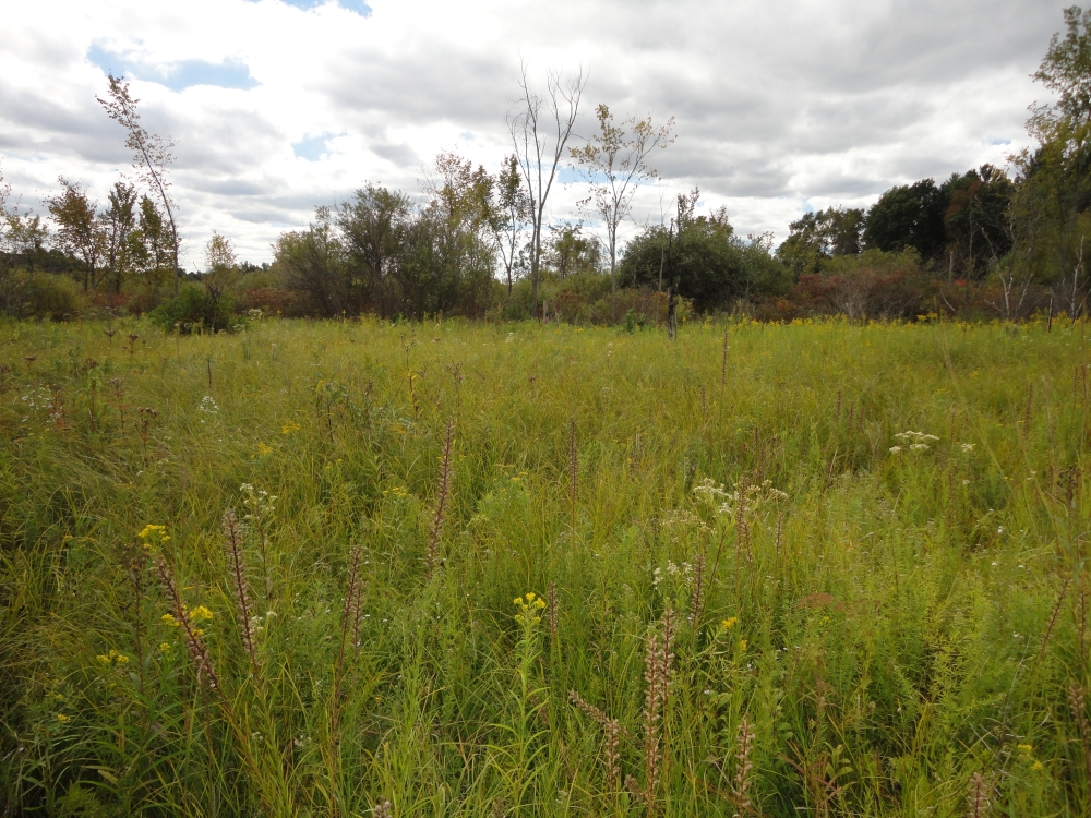 A photo of the Wet-Mesic Prairie natural community type