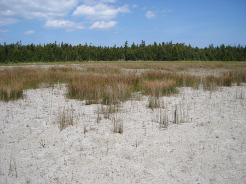 A photo of the Coastal Fen natural community type