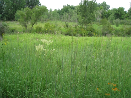 A photo of the Dry-Mesic Prairie natural community type