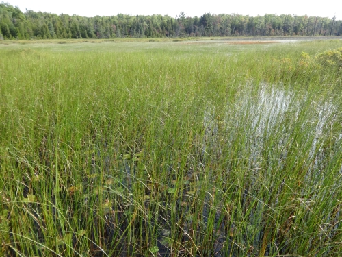 A photo of the Emergent Marsh natural community type
