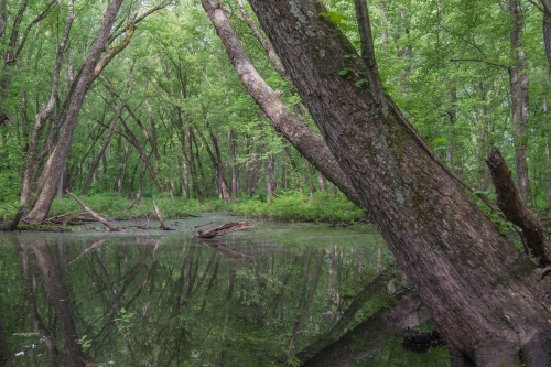 A photo of the Floodplain Forest natural community type