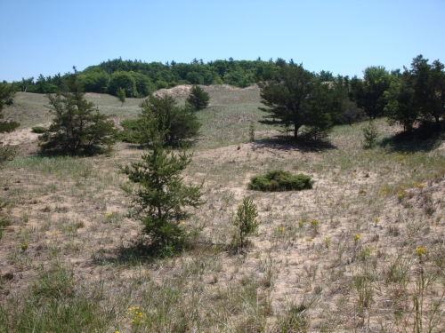 A photo of the Great Lakes Barrens natural community type