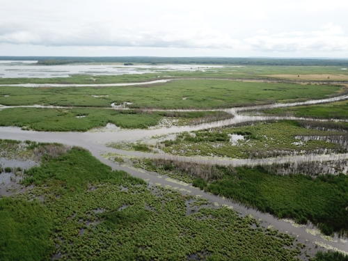 A photo of the Great Lakes Marsh natural community type