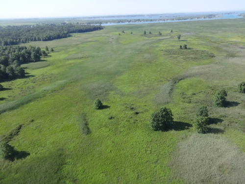 A photo of the Lakeplain Wet Prairie natural community type