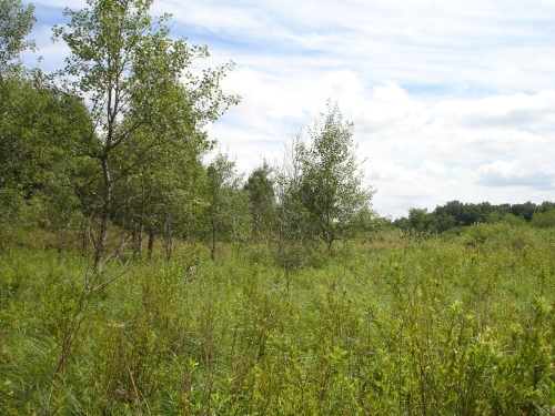 A photo of the Wet Prairie natural community type